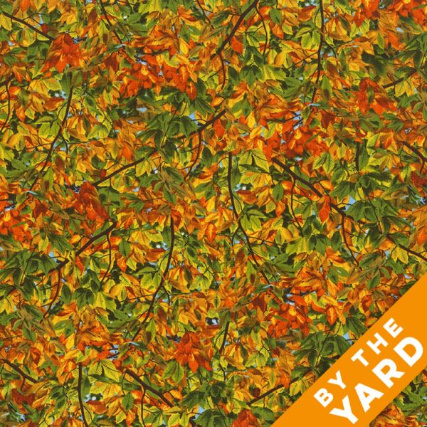 Timeless Treasures - Nature-C4979-Autumn - Fabric By the Yard
